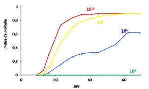 Cinétique de développement du flétrissement bactérien