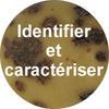 Identifier et caractériser les parasites