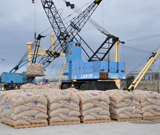 Export de pomme de terre